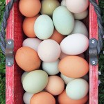 Farm Fresh Baked Eggs via J5MM.com // #Airstream