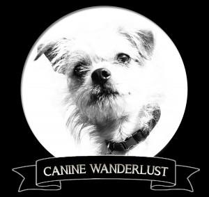 Oliver's Travels // Canine Wanderlust