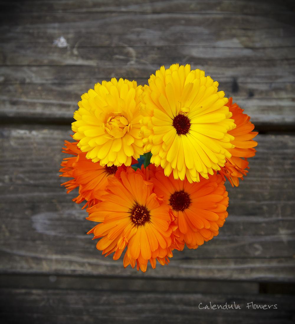 Edible Calendula Petals