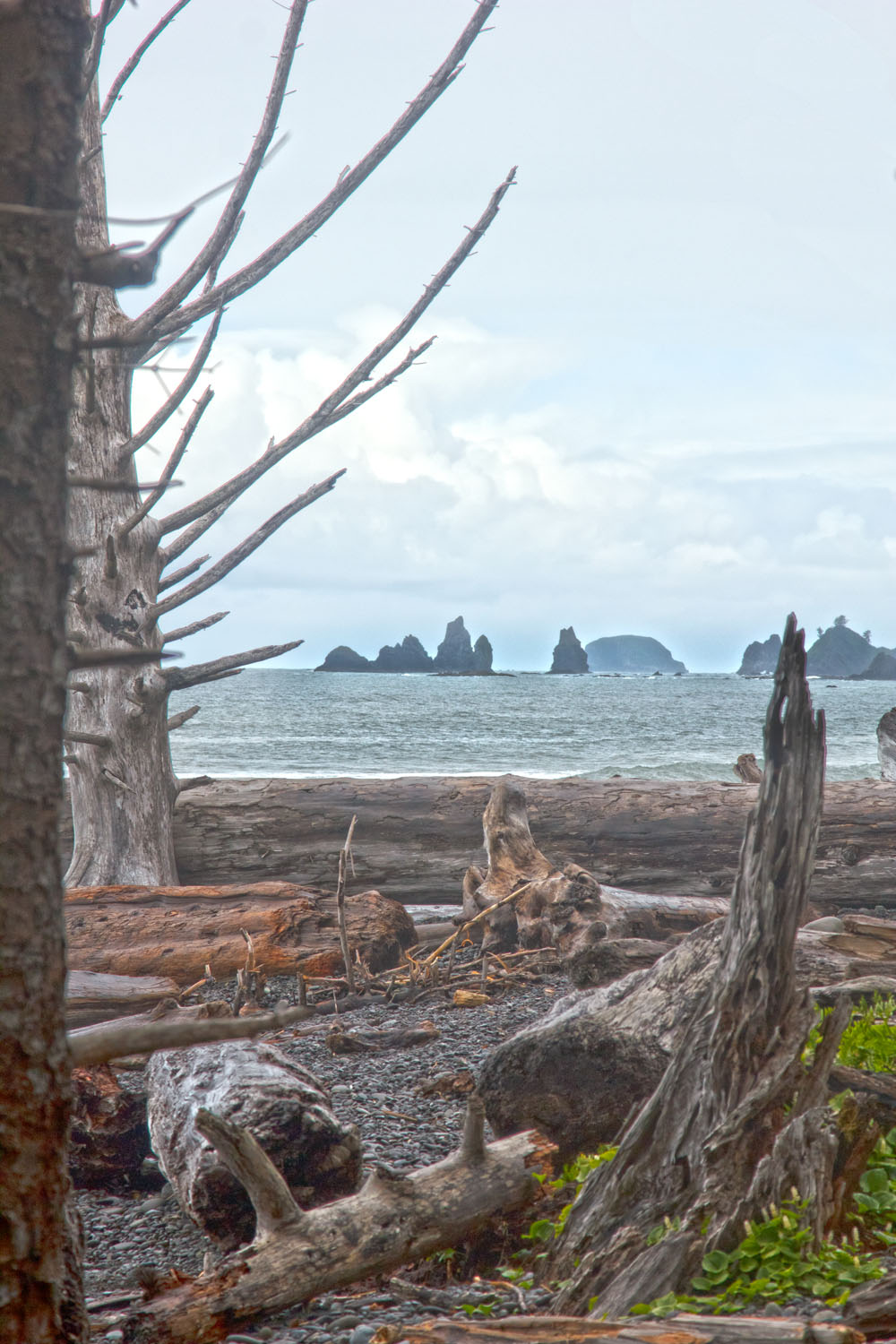 Rialto Beach Olympic Peninsula