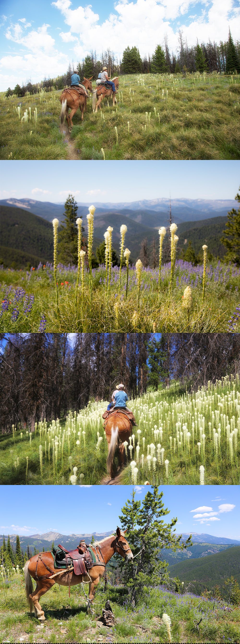 Horseback riding along the Idaho Montana Divide with Storm Creek Outfitters