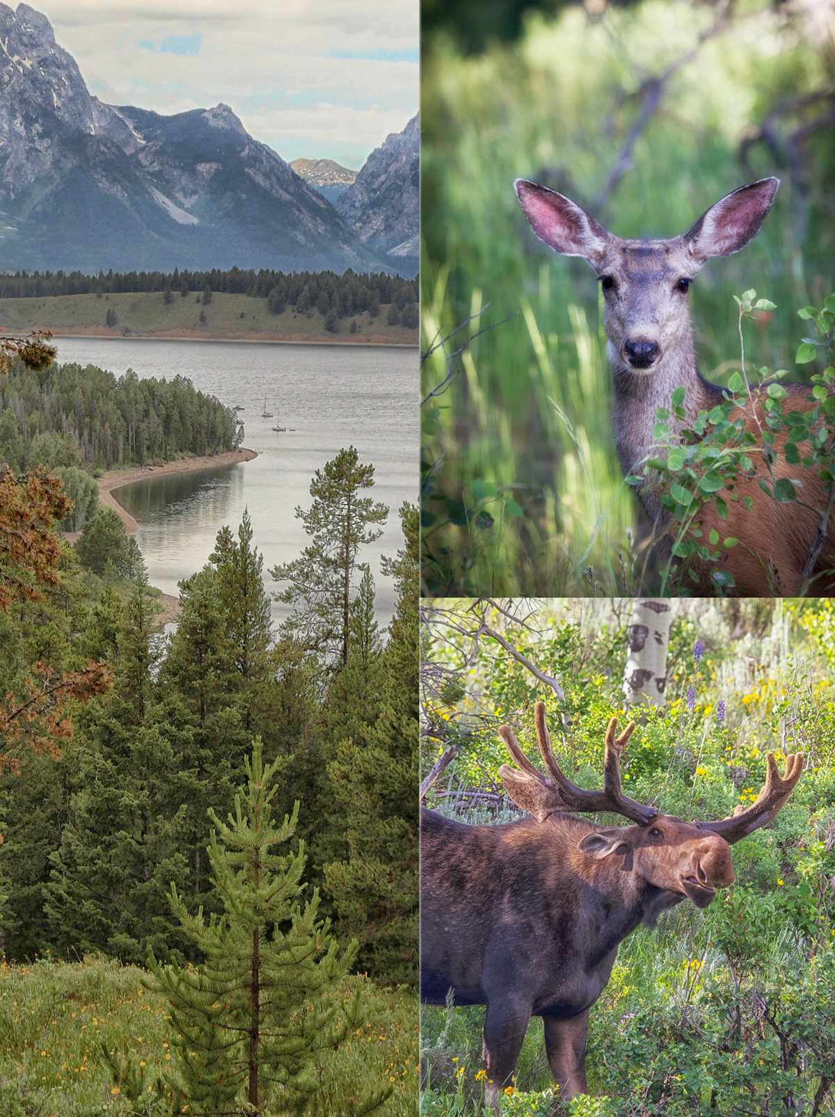 Grand Teton National Park with Jackson Wildlife Safaris