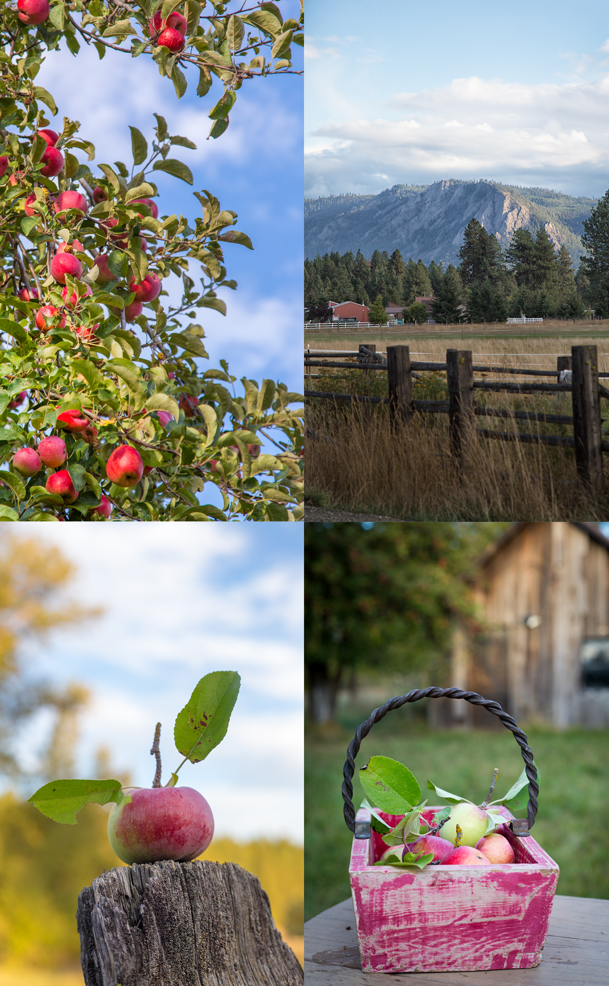 apples in roslyn, wa with a view of Peoh Point