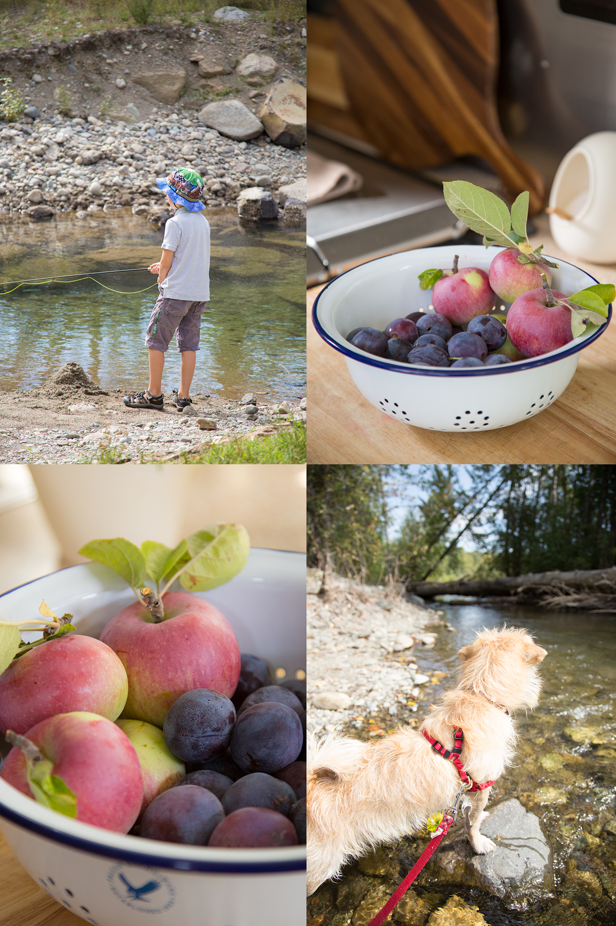 apple and plum picking in eastern washington