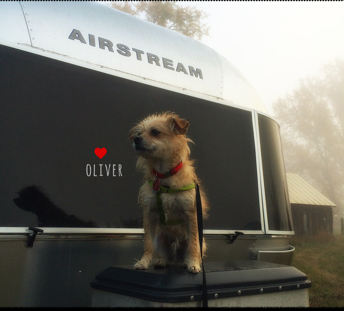 Airstream glamping with Oliver our dog