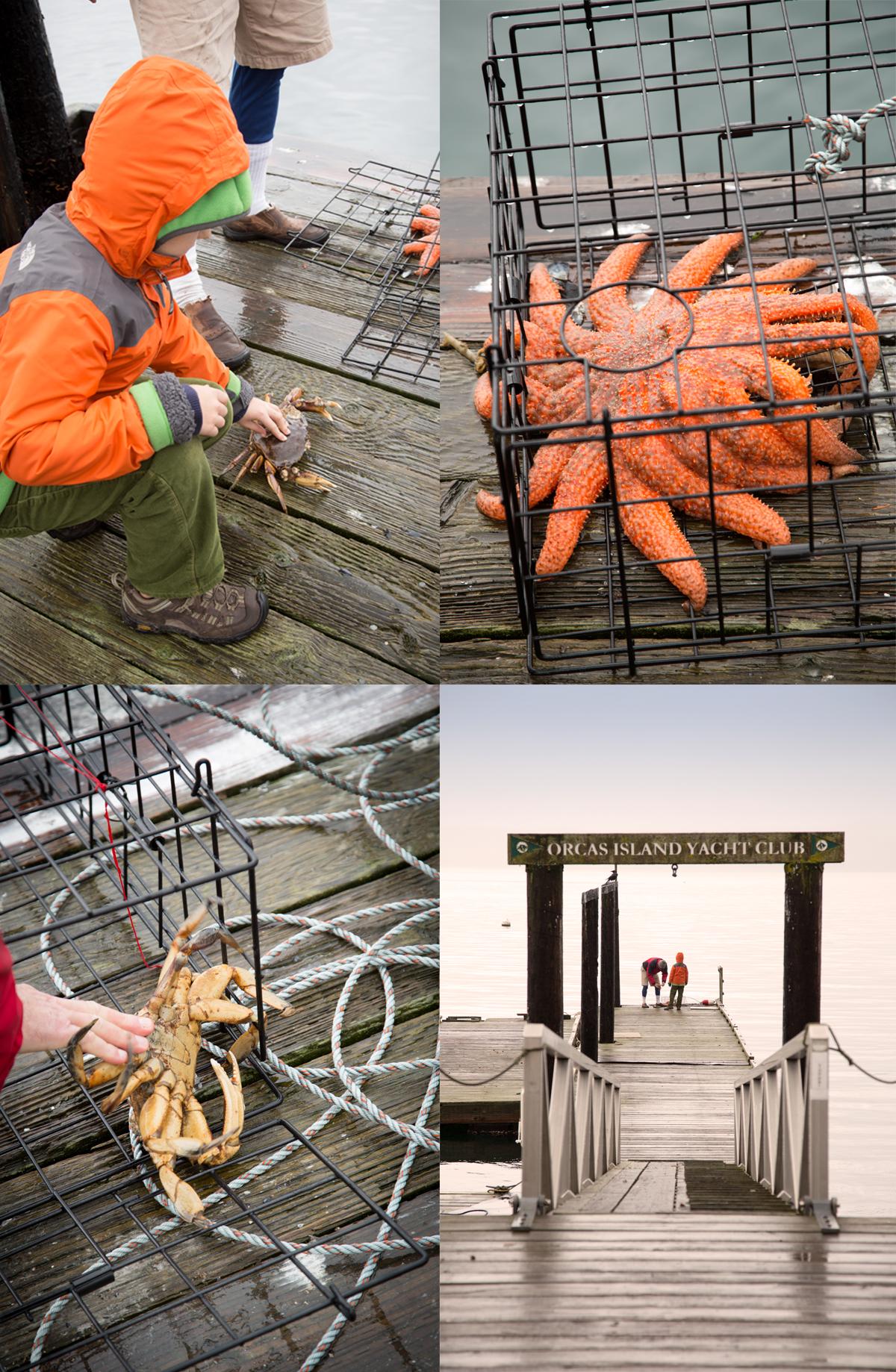 Orcas Island Crabbing Season