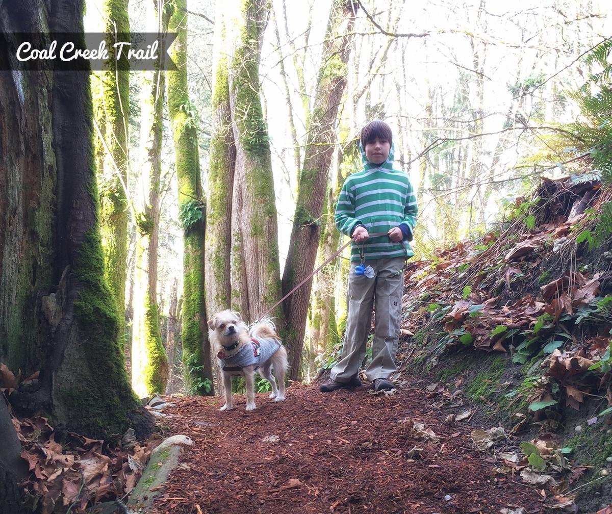 Hiking Coal Creek Trail in Bellevue, WA