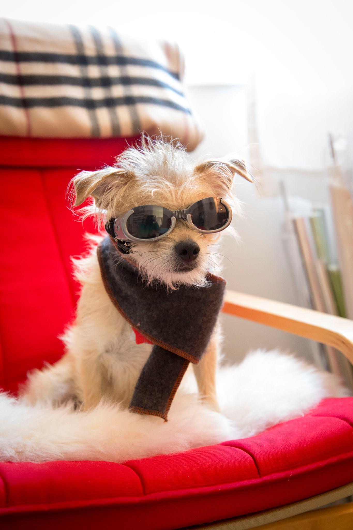 Oliver Canine Wanderlust
