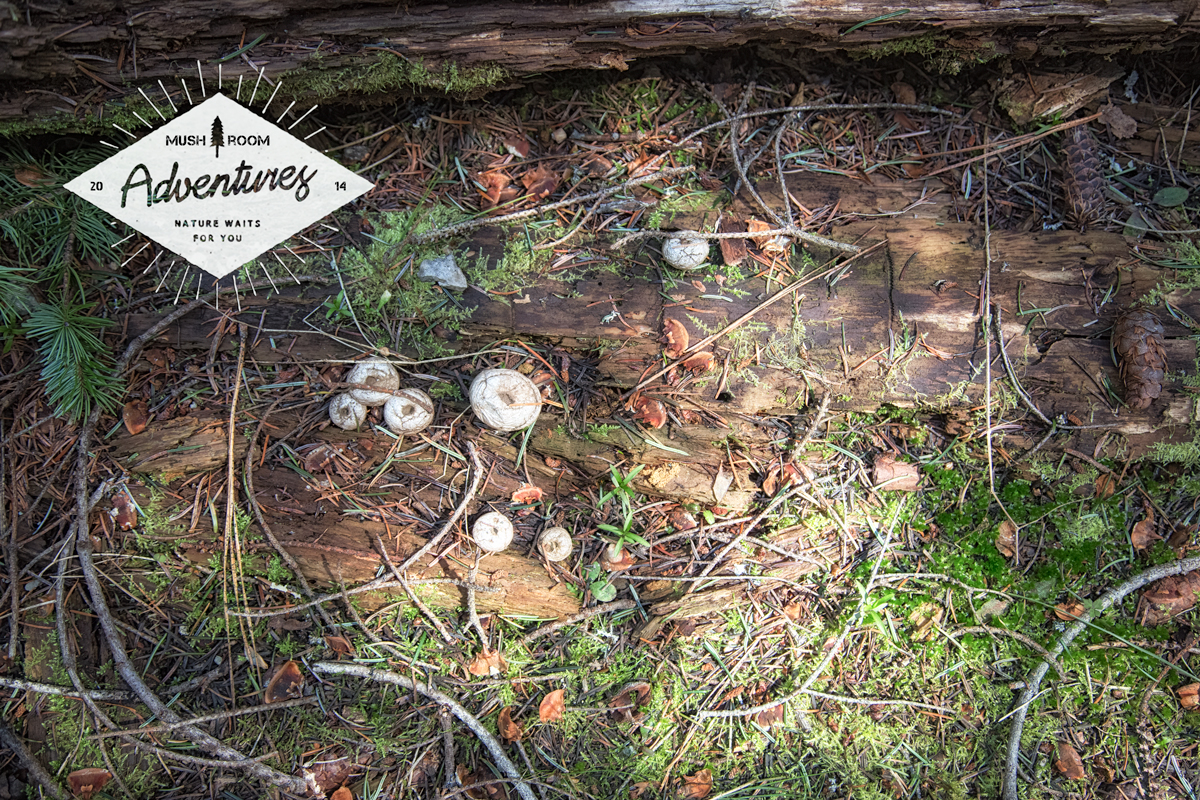 Morel Mushroom Hunting in Eastern Washington