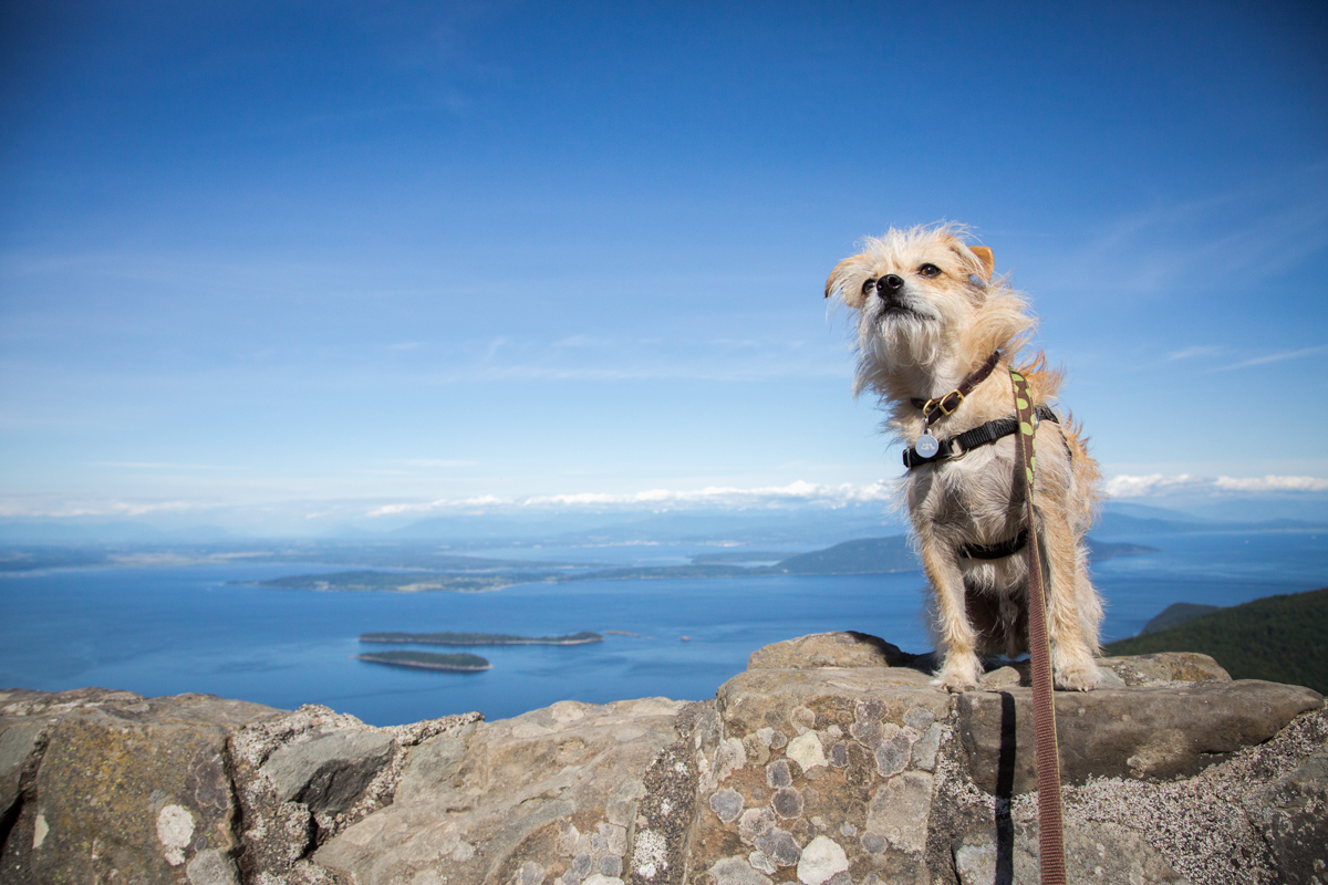 top of Mt. Constitution on Orcas Island via J5MM.com