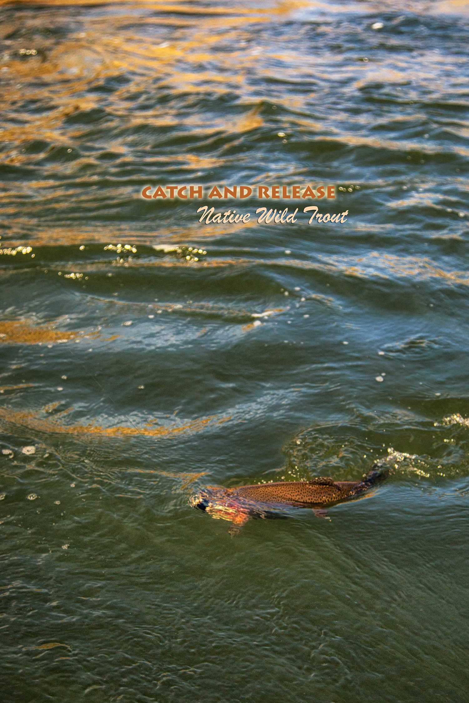 Native Trout in Hells Canyon via J5MM.com