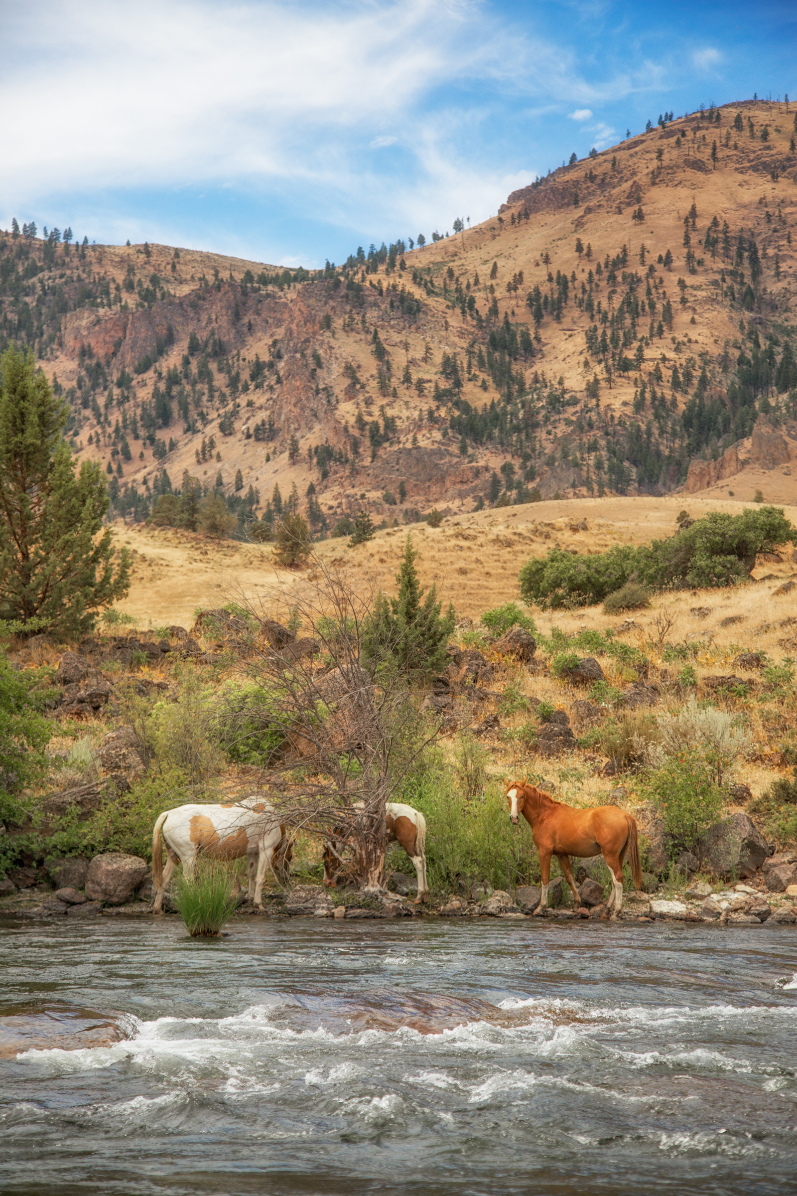 Wild Horses on the Deschutes River with Deschutes River Outfitters Matt and Nate via J5MM.com