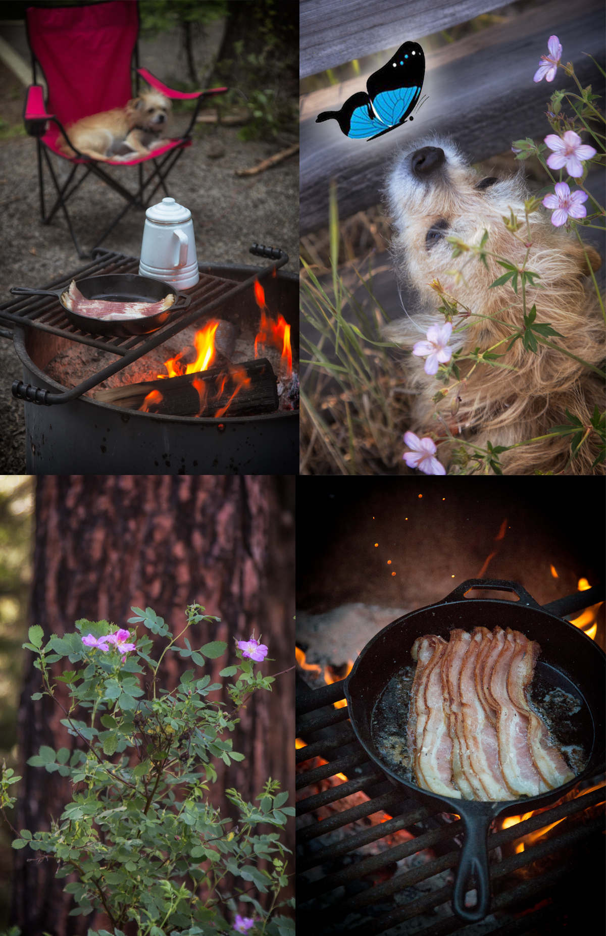 Glamping In The Oregon Forest via J5MM.com