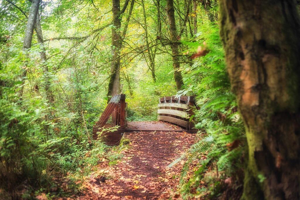 Forest Trail Hike via J5MM.com