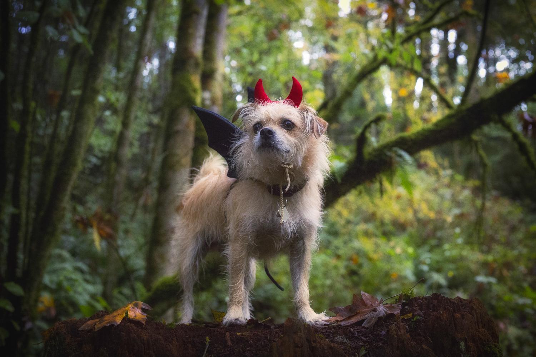 Spooky Creature via J5MM.com