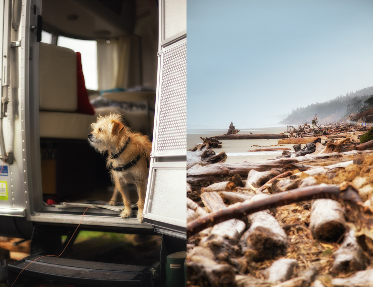 Canine Wanderlust on the Olympic Peninsula via J5MM.com // #Airstream #GoRVing