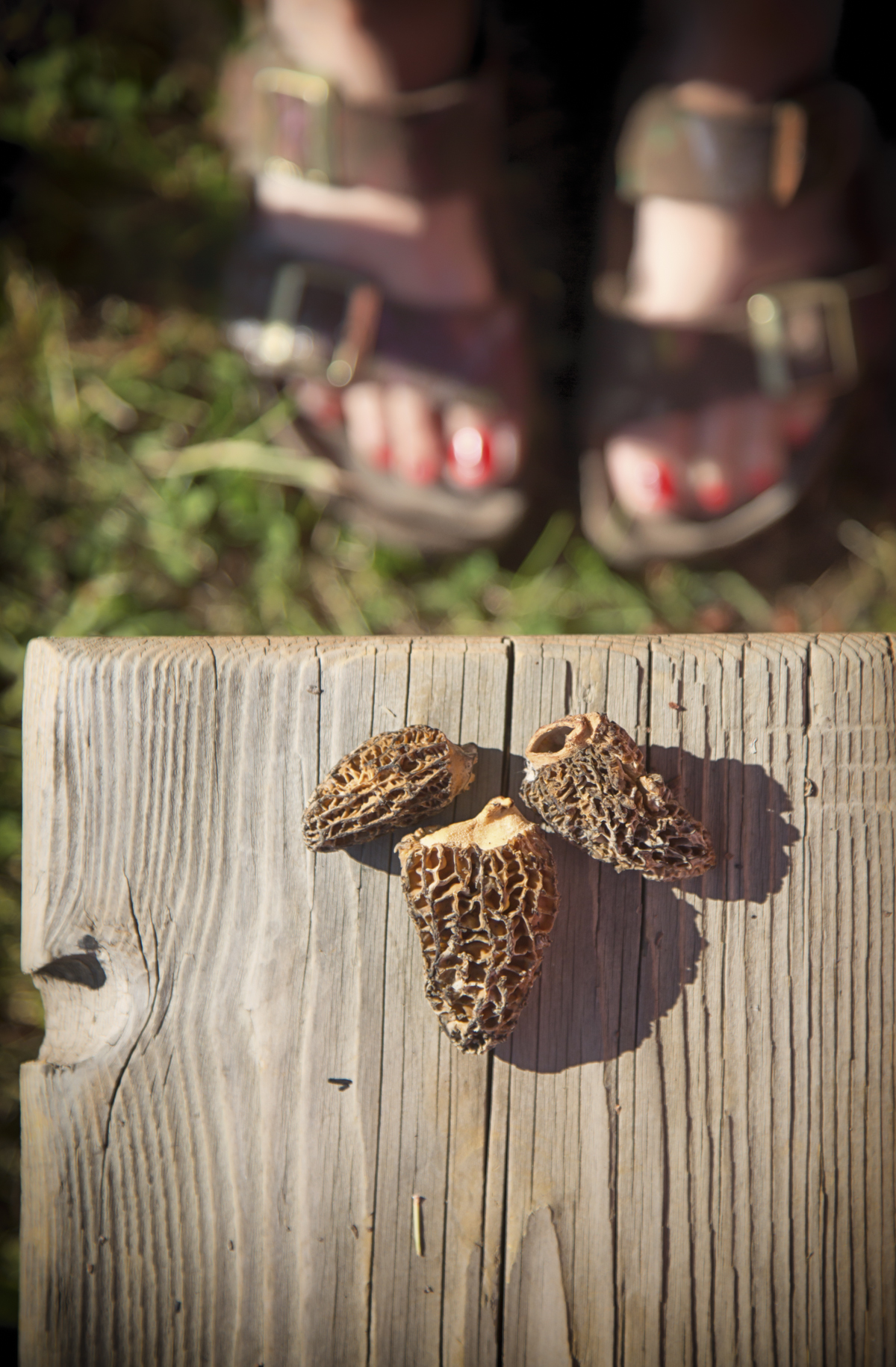 Morel Mushrooms via J5MM.com