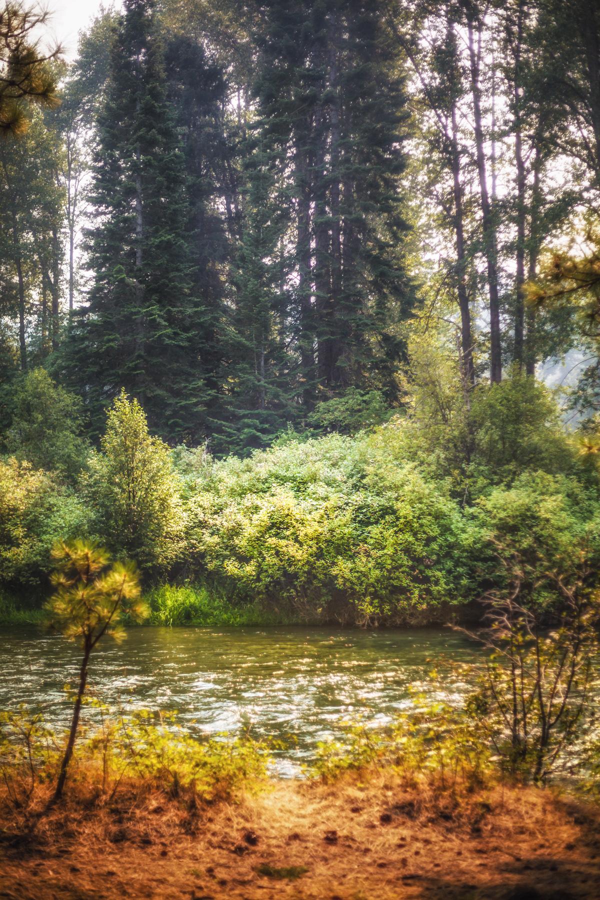Smokey River and Forest via J5MM.com
