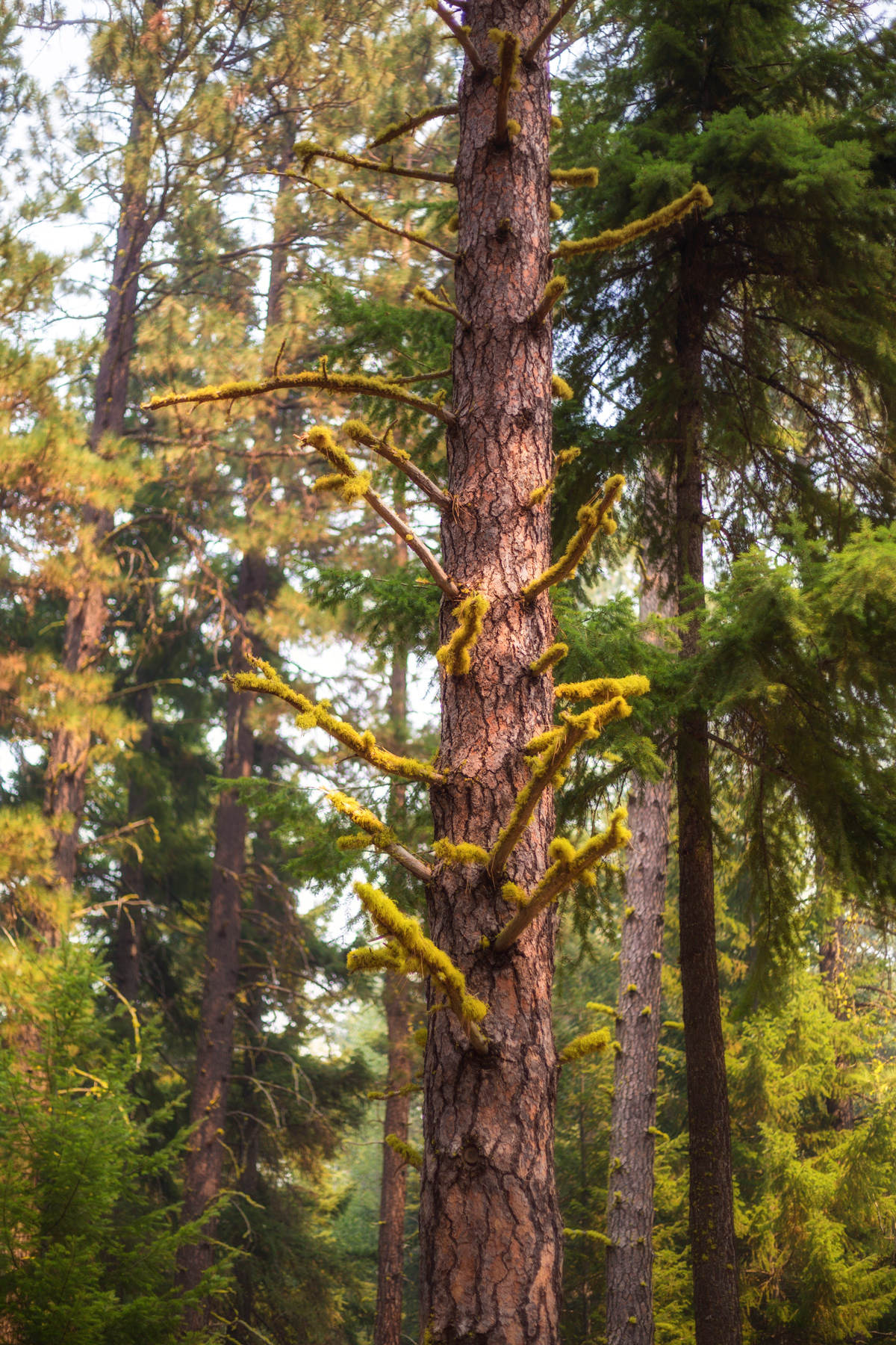 Lichen decorated cedar via J5MM.com