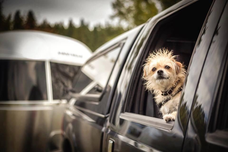 Sir Oliver Bennett // Canine Wanderlust ♥